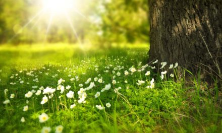 Investir dans un arbre : combiner économie et écologie