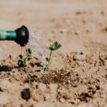 Quelques astuces pour lancer votre jardin biologique chez vous