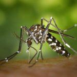 Quels remèdes naturels pour lutter contre les moustiques ?