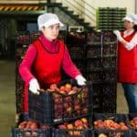 Industrie agroalimentaire : pourquoi et comment former des collaborateurs en interne?